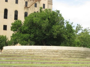 Survivor Tree at Oklahoma City Memorial